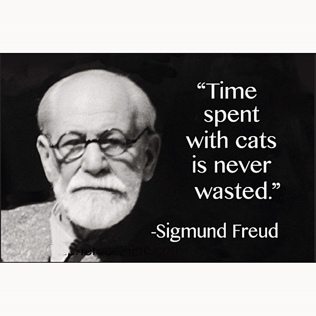 Time Spent With Cats Is Never Wasted (Sigmund Freud) funny fridge magnet (ep) - time-spent-with-cats-is-never-wasted-sigmund-freud-funny-fridge-magnet-ep--9689-p